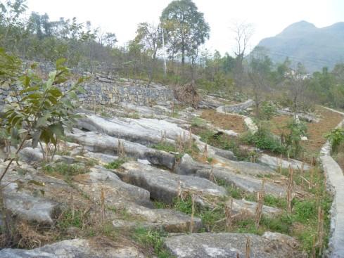 China karst rocky desertification